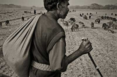 Muhammad Murtada - Swineherd: the salaried gypsy