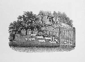Thomas Bewick - The Yoked Sow and the Thieving Piglets