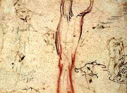 Jacques Callot - sketch of a leg and a pig's head