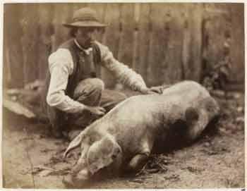Léon Crémière - Cochon couché avec un homme à côté