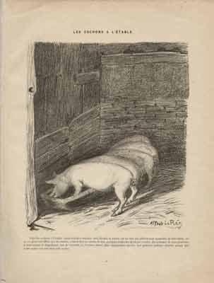 Alfred Le Petit - Les cochons à l'étable