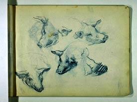 Lucien Levy-Dhurmer - Cinq études de têtes de cochons