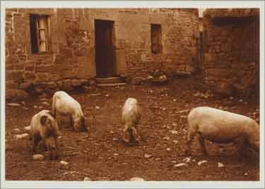 Charles Augustin Lhermitte - Porcs dans une cour de ferme