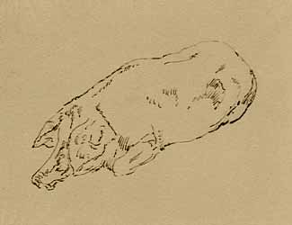 Gustave Moreau - Etude de porc couché