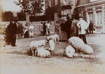 Gustave Popelin - Marchands de porcs #2