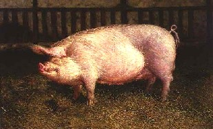 James Wyeth - Portrait of Pig