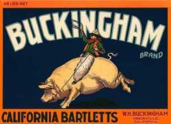 bucking pig