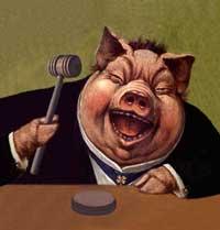 pig judge